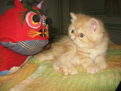 Котенка в подарок приму