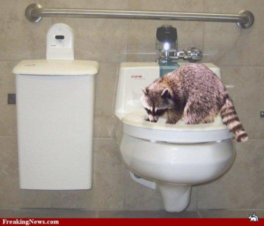 В туалете домашних условиях