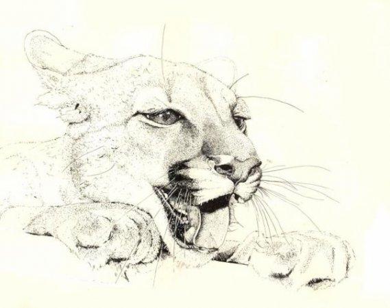 Красивые рисунки девушек кошек