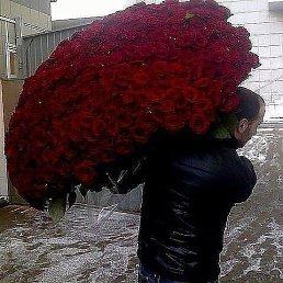 Алина, 29 лет, Ивано-Франковск