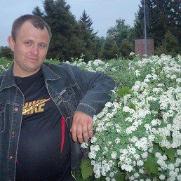 Василий, 41 год, Новомиргород