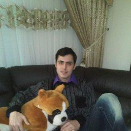 daniel, 27 лет, Холон