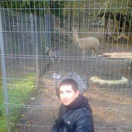 Виктор, 26 лет, Новоград-Волынский
