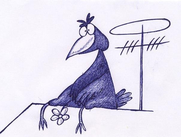 Рисунок смешные птички, хохлы смешные