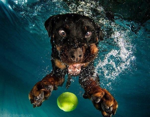 Уморительные морды ныряющих собак - 8