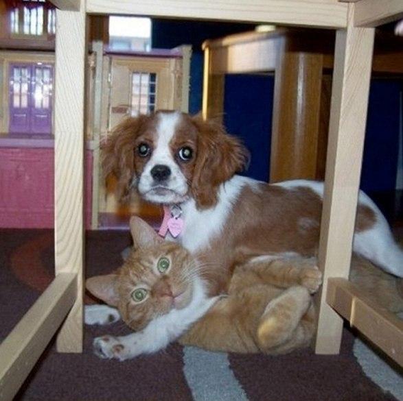 Чем занимаются собаки, когда хозяев нет дома - 2