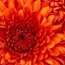 Фото Китосуне, Молодечно - добавлено 6 июня 2014 в альбом «Мои фотографии»