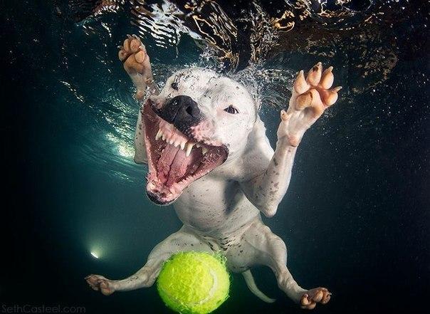 Уморительные морды ныряющих собак - 10