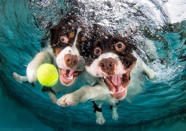 Уморительные морды ныряющих собак - 9