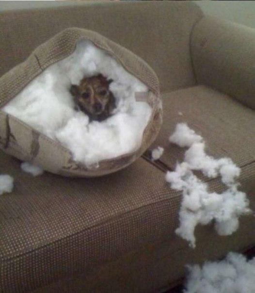 Чем занимаются собаки, когда хозяев нет дома - 6