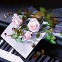 Красота !!! из альбома «Мои фотографии»