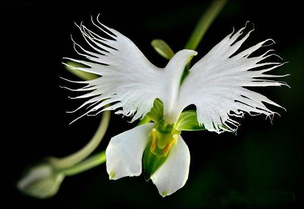 Необычные цветы , которые похожи на что-то другое - 9