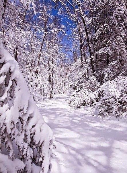 Я с детства испытываю своеобразное волнение перед свежим покровом снега… Точно вступаешь в какой-то ... - 2