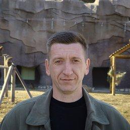 Михаил, 44 года, Селты