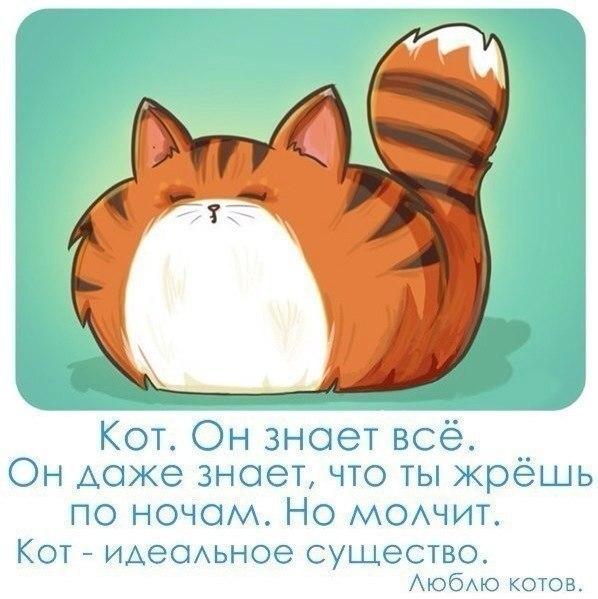 Картинки про личную жизнь и кошек