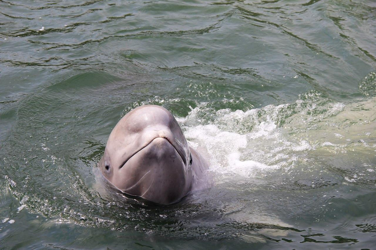 фото перевозка дельфинов и белух музыку, включили свет