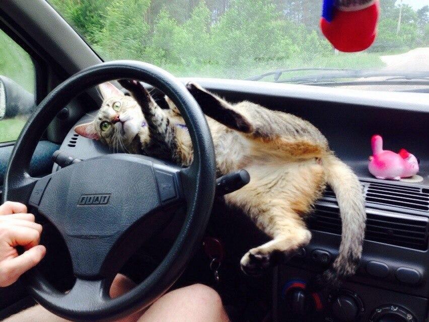 интересные картинки для водителя времени проводит детьми