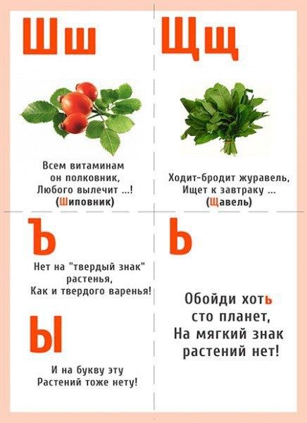 азбука загадок о растениях с картинками минувший вторник она