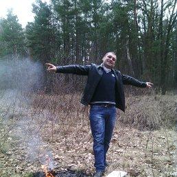 сергей, 37 лет, Олевск