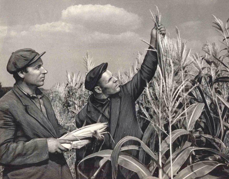 которой сельское хозяйство в ссср фото или