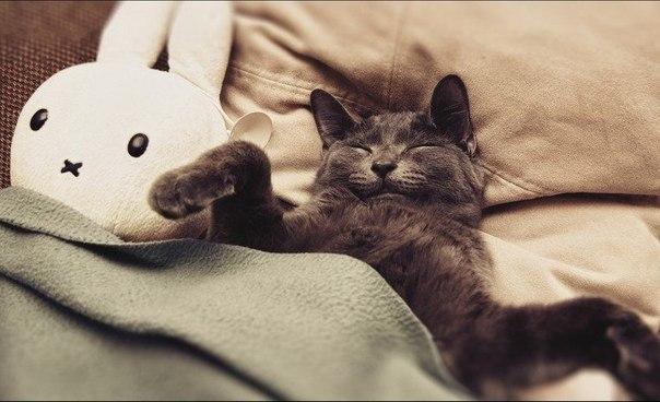 Не высыпаюсь... То ли ночи короткие, то ли я так быстро сплю...