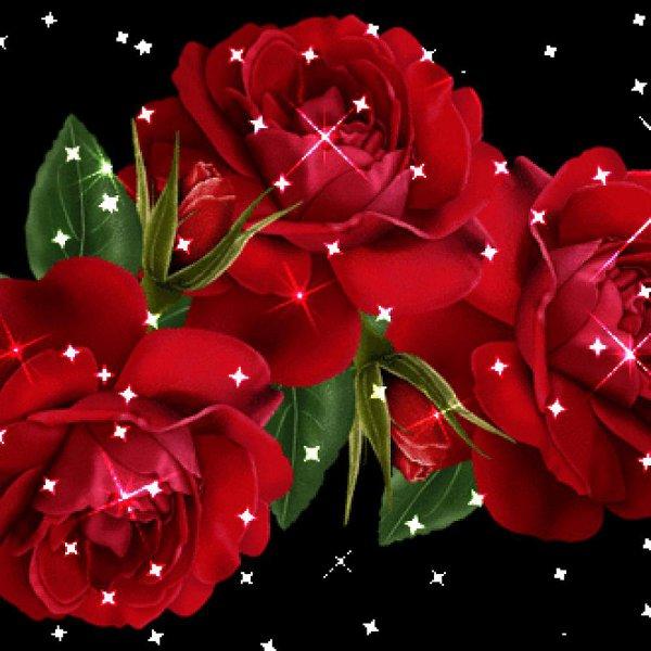 Картинки красивые цветы розы анимация для ватсап, своими