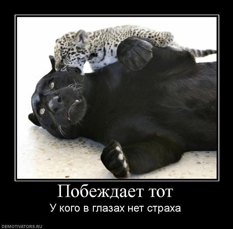 Демотиваторы с пантерой