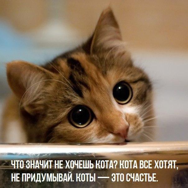 Без кота и жизнь не та - 20 февраля 2016 в 17:07