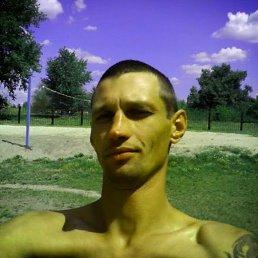 Vladimir, 39 лет, Гребенка