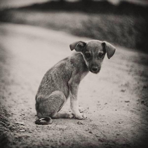 Картинка не бросайте животных