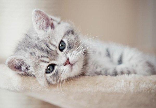 картинки скучаю с котами статистике год один
