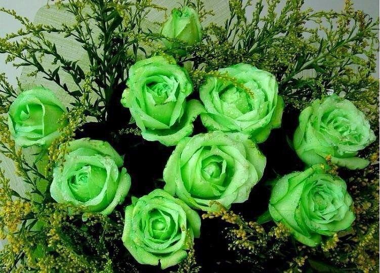 Букетов, букет роз зеленых фото