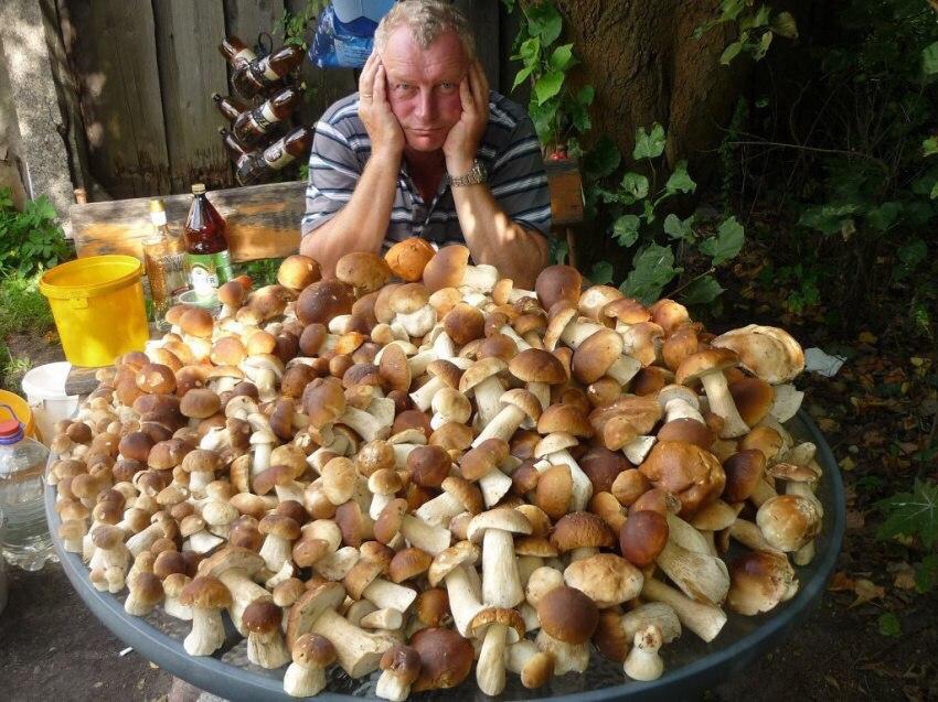 Теперь грибы на завтрак, обед и ужин.