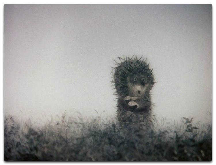 это где курсовая ежик в тумане фото александре нелегко