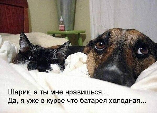 Без кота и жизнь не та - 12 июня 2017 в 22:23
