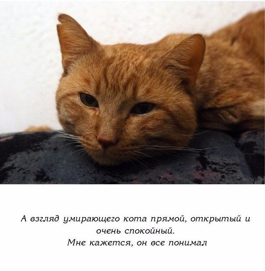 картинка ты умрешь кот все последние