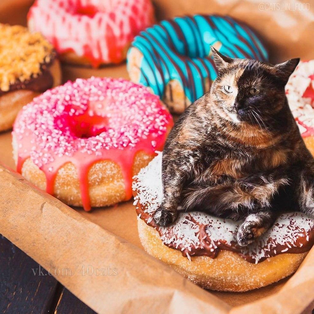 картинки с едой для кошек антоненко это прекрасная