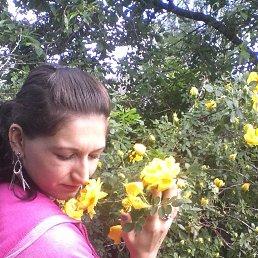 Алиса, 27 лет, Полтава