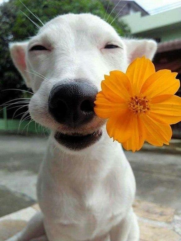 Кто красивый? Я - красивый!