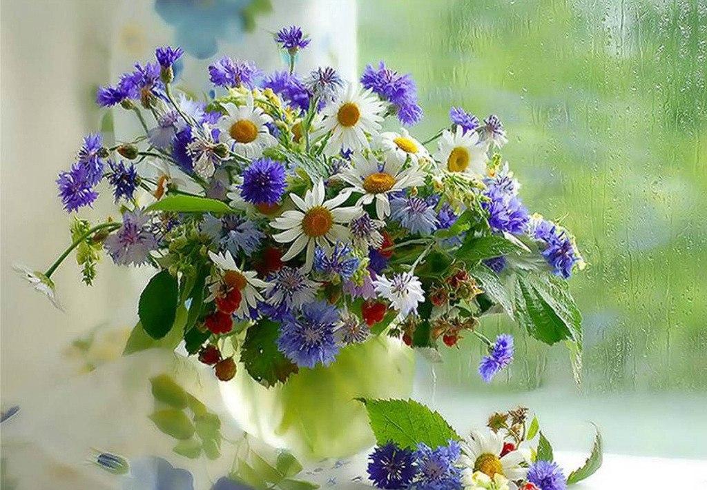 Дня здоровья, открытки с днем рождения женщине красивые с полевыми цветами