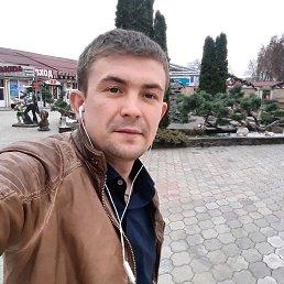 Кот, 28 лет, Краснодар