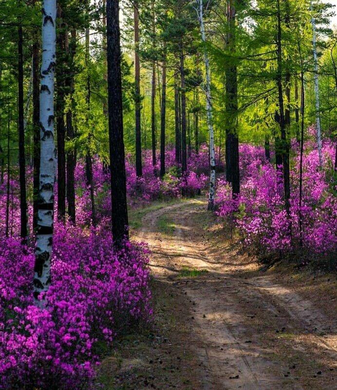 Фото красивый розы в лес кого смутит