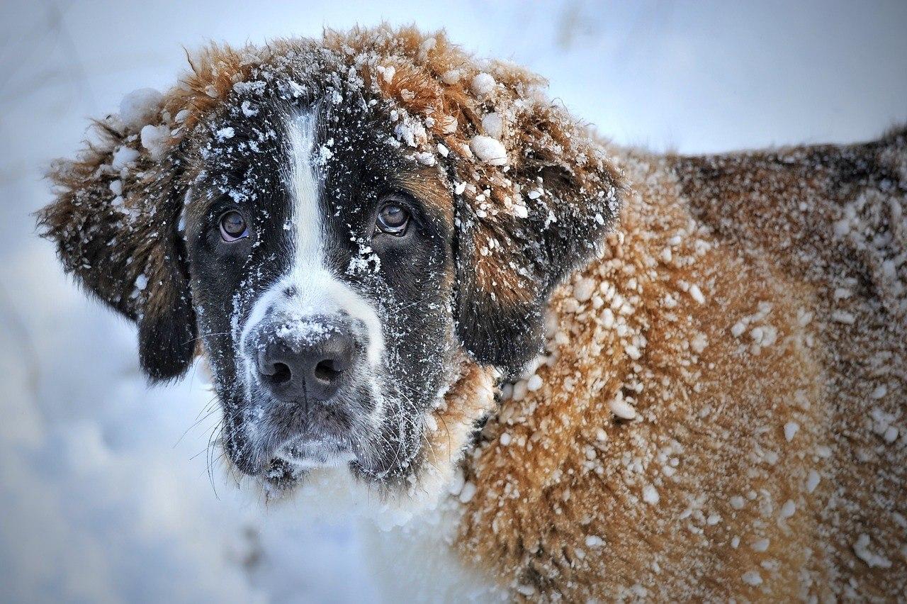Собаки - 16 марта 2019 в 03:35