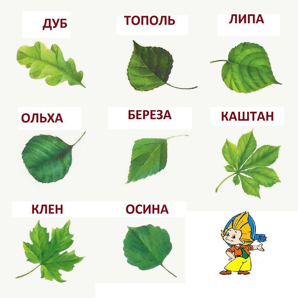 Картинка лист с дерева для детей