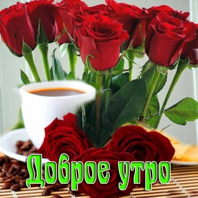Открытка с цветами девушке доброе утро