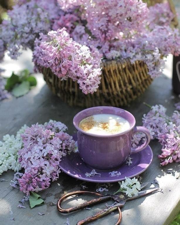 Доброе утро весеннее картинки красивые необычные нежные