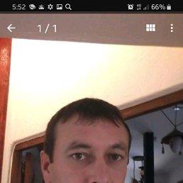 Серж, 38 лет, Воронеж