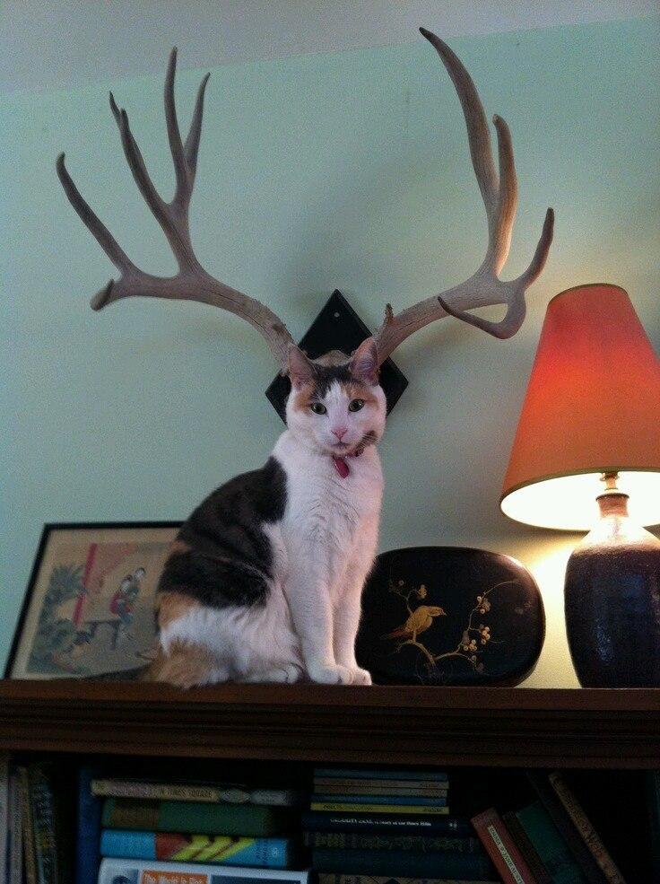 Котик с рогами картинка