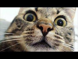 Я РЖАЛ ПОЛЧАСА. Смешные Коты и Собаки. ПРИКОЛЫ С ЖИВОТНЫМИ. #32