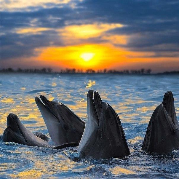 Дeльфины на зaкате.